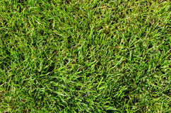 Background of fresh green summer grass Stock Photo