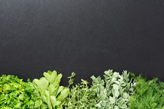 Background with fresh herbs stock image