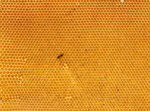 Background of fresh honey in comb Stock Image