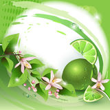 Background with fresh lime Stock Photo