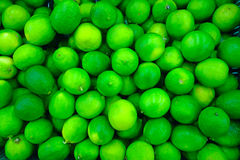 Background of  fresh  lime fruit Stock Image