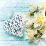 Background with fresh narcissus and decorative heart Royalty Free Stock Photography