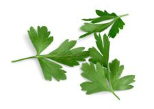 Fresh parsley on white background. Background fresh parsley green white isolated closeup Stock Image
