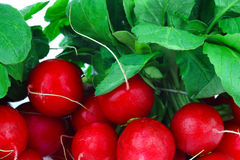 Background of fresh radishes Stock Images