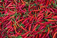 Background of Fresh red chili pepper and No pesticide residue in The organic market royalty free stock images