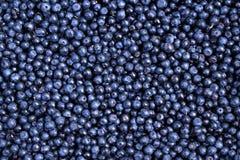 Background of fresh ripe blueberries. Stock Photos
