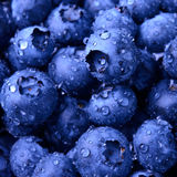 Background of Fresh Ripe Sweet Blueberries Covered with Water Drops Stock Image