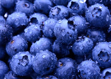 Background of Fresh Ripe Sweet Blueberries Covered with Water Drops Stock Images