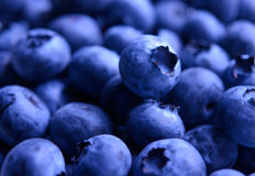 Background of Fresh Ripe Sweet Blueberries Royalty Free Stock Photos