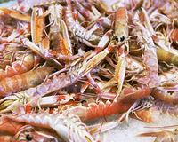 Background of fresh scampi. For sale at a market Stock Image