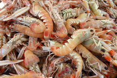 Background of fresh scampi. For sale at a market Royalty Free Stock Image