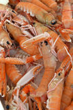 Background of fresh scampi for sale. At a market Royalty Free Stock Photos