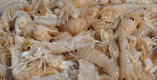 Background of fresh shrimp Royalty Free Stock Photography