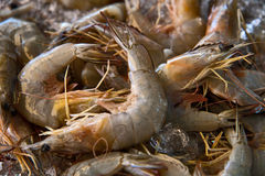 The background of a fresh shrimp Stock Image