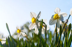 Background with fresh spring flowers Stock Photography