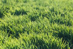 Background of fresh spring green grass Stock Images