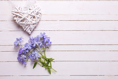 Background with fresh tender blue flowers and decorative heart. On white painted wooden planks. Selective focus. Place for text Royalty Free Stock Photos