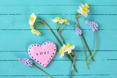 Background with fresh tender daffodils and muscaries flowers and Royalty Free Stock Images