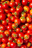 Background of fresh tomatoes. Background of fresh red tomatoes Royalty Free Stock Photo