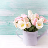 Background with fresh  tulip flowers Stock Photos