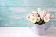Background with fresh  tulip flowers Royalty Free Stock Image