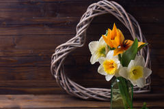 Background with fresh tulips, narcissus and  decorative heart Royalty Free Stock Photography