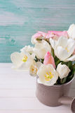 Background with fresh  tulips  and narcissus flowers Royalty Free Stock Images