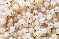 White currant individual fruits background royalty free stock photography