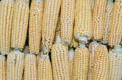 Background of fresh yellow corn cobs Royalty Free Stock Photos