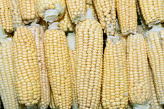 Background of fresh yellow corn cobs Royalty Free Stock Images