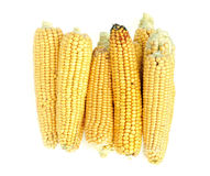 Background of fresh yellow corn cobs. The background of fresh yellow corn cobs. Ears of ripe corn Stock Photos