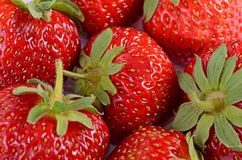 The background from freshly harvested strawberries Royalty Free Stock Image