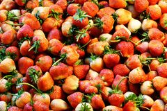 Background from freshly harvested strawberries. Close up royalty free stock photos
