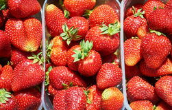 Background from freshly harvested strawberries, directly above. Royalty Free Stock Images