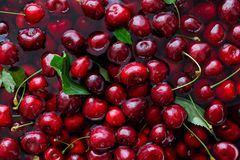 Background of freshly picked red cherries with leaves in water f Royalty Free Stock Photos