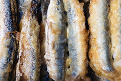 Background of fried anchovies Royalty Free Stock Images