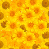 Background From Yellow Flowers Royalty Free Stock Images