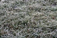 Background of frosty grass Royalty Free Stock Image