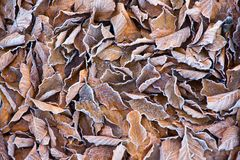 Background of frosty leaves Stock Photo