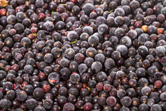 Background from the frozen black  currants Stock Image