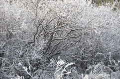 The background frozen winter branches Royalty Free Stock Images