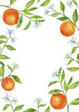 Background with fruit tree branches, flowers, leaves and oranges Royalty Free Stock Photos