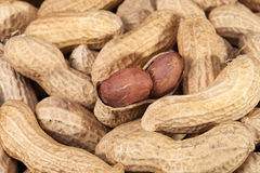 Background of fruits of groundnut, close up Royalty Free Stock Photo
