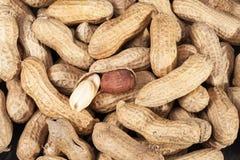 Background of fruits of groundnut, close up Stock Image