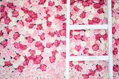 Background full of white and pink roses Stock Photos
