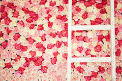 Background full of white and pink roses royalty free stock photography