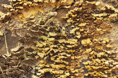 Background of fungus growing on a log Stock Images