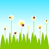 Background with funny ladybirds and camomiles Royalty Free Stock Image