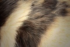 Background of fur cat at the park Stock Photo