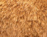 Background of fur. Photo of an abstract texture royalty free stock photos